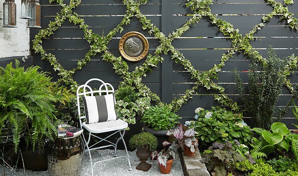 Modern Espalier In A Small Garden