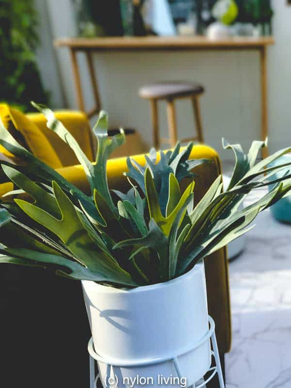 A Plant Lovers Bedroom (And the 10 Best Plants To Keep in the Bedroom for Better Sleep)