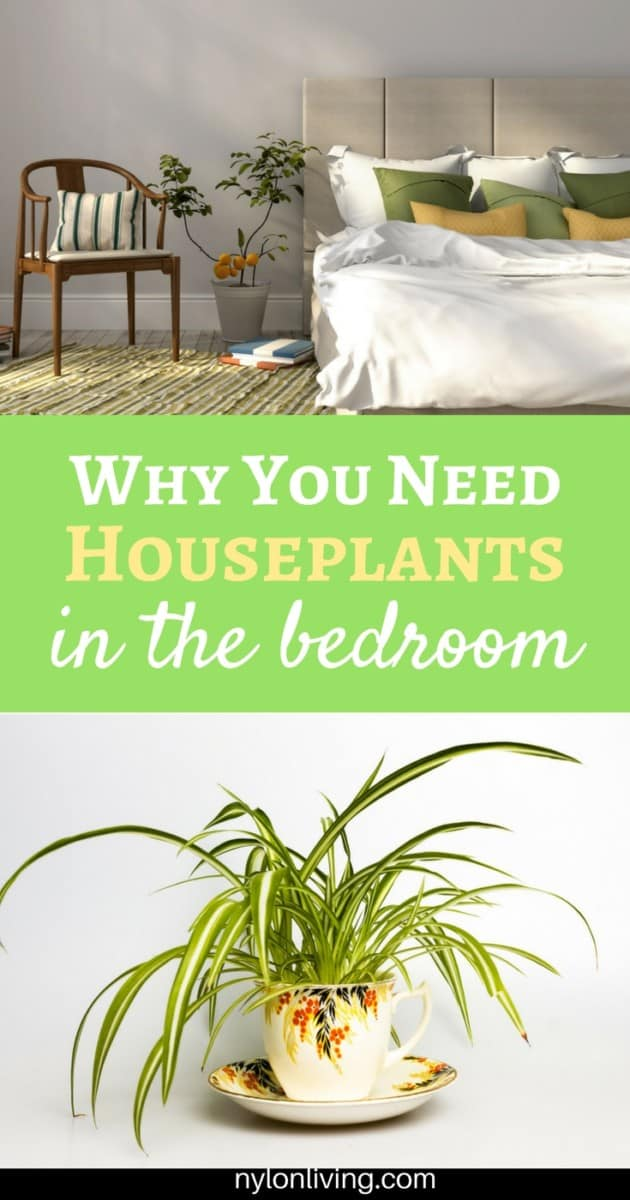 A Plant Lovers Bedroom (And The 10 Best Plants To Keep In The Bedroom For