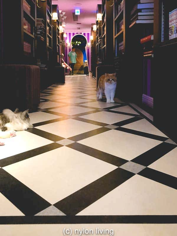 The Hallway themed like the Mad Hatters Library from Alice in Wonderland #Tokyo #AliceinWonderland #catcafe #cats