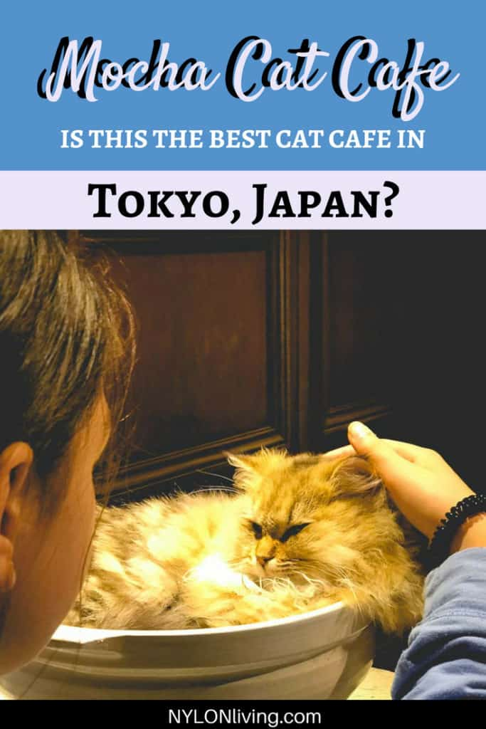 The Charming Mocha Cat Cafe with An Alice in Wonderland Theme #Tokyo #Japan #kawaii #catcafe #Harajuku #visitJapan
