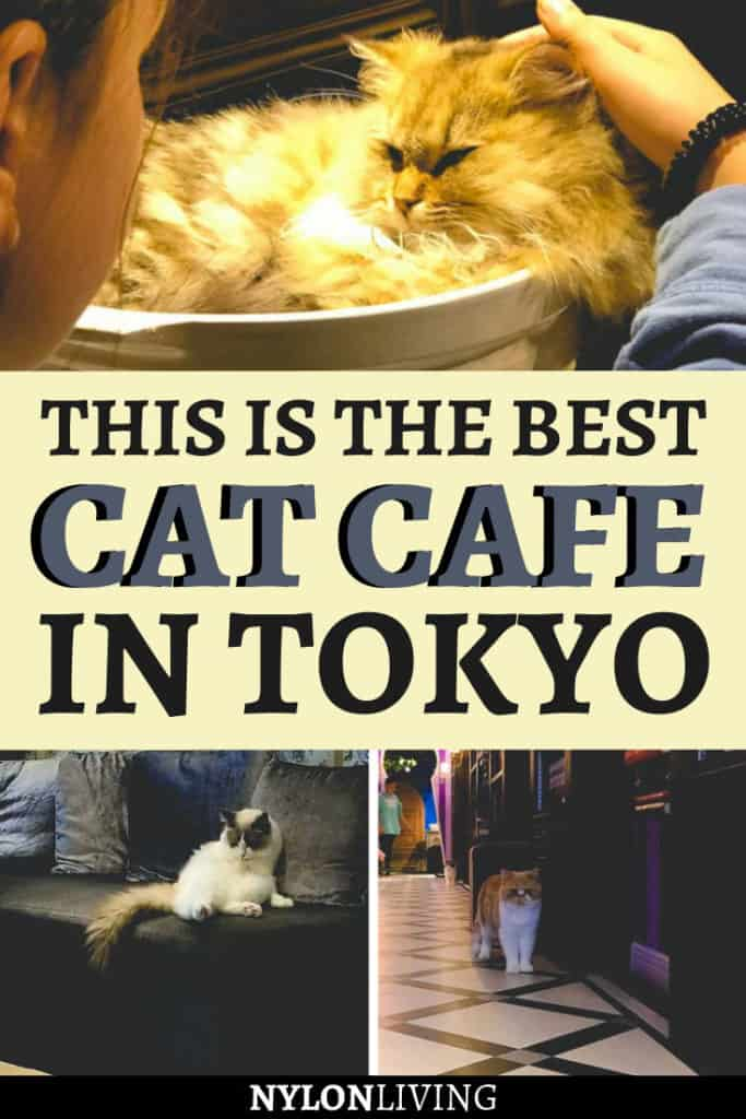 If you're visiting Japan, you can't miss the multitude of theme and cat cafes in Tokyo. And what about a cat cafe with an Alice in Wonderland theme? Yes, it exists! The Mocha cat cafe in Harajuku is so much fun for the whole family. This cat cafe design + the pristine kitties make this special coffee shop a must visit in Tokyo, Japan. #tokyo #catcafe #cat #café #japan #aliceinwonderland
