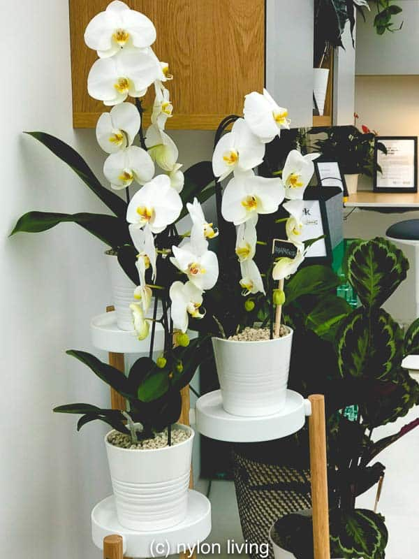 An Ikea plant stand displays orchids. #ikeaplants #cheapgardenplants #homeoffice #homedesign #homedecor #homeofficeinspo #workspacestyling #study #workspace #workspacegoals #workhardanywhere #officeinspo