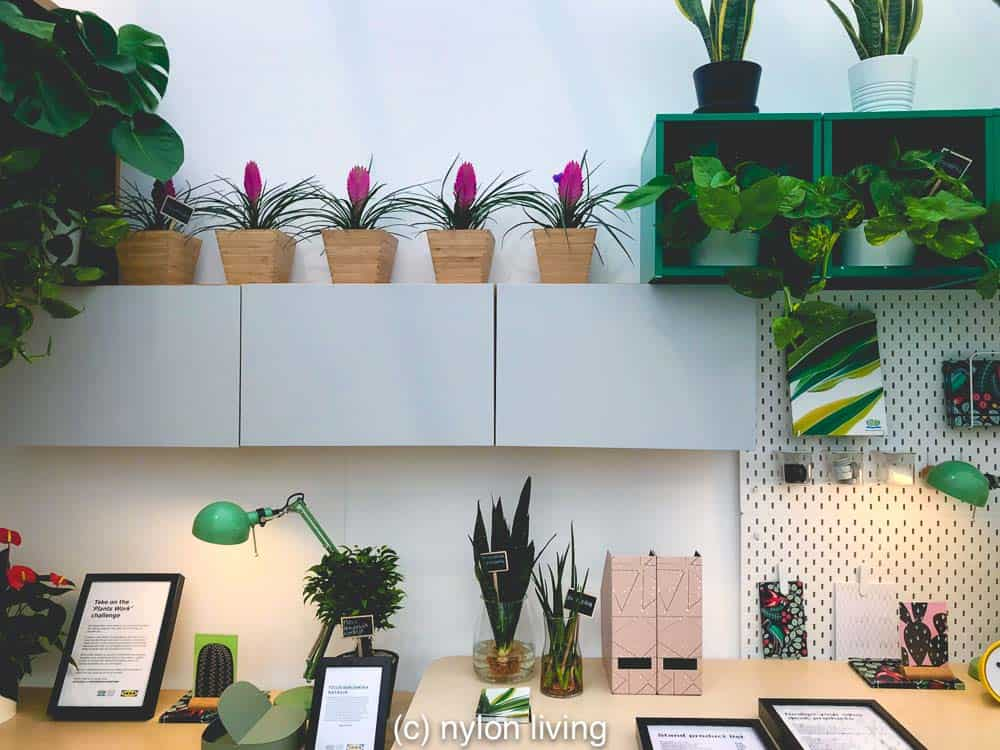 A double desk space that incorporates greenery. #IkeaBesta #ikeaplants #cheapgardenplants #homeoffice #homedesign #homedecor #homeofficeinspo #workspacestyling #study #workspace #workspacegoals #workhardanywhere #officeinspo