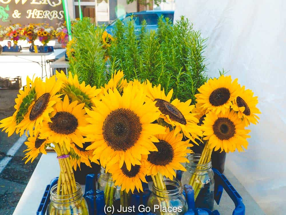 Sunflowers for sale at the Charlottesville Farmers Market