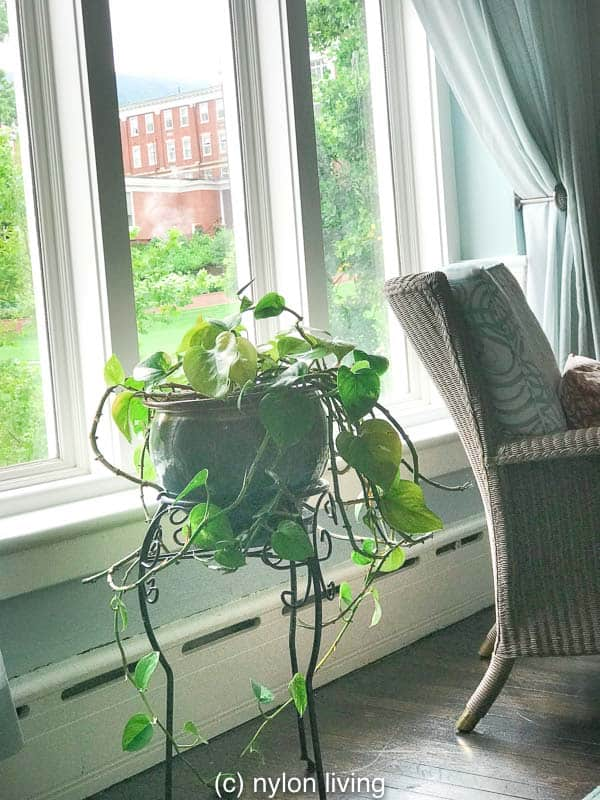 Rattan furniture and plants make for a cozy room