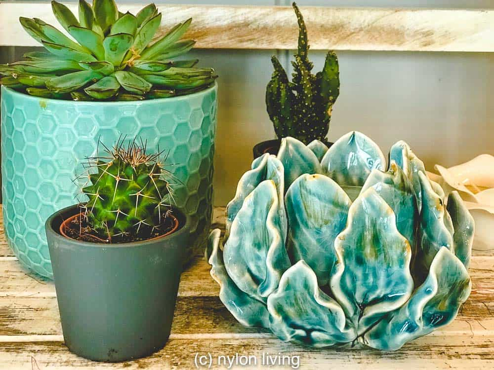 Succulents are perfect to grow in your garden summerhouse