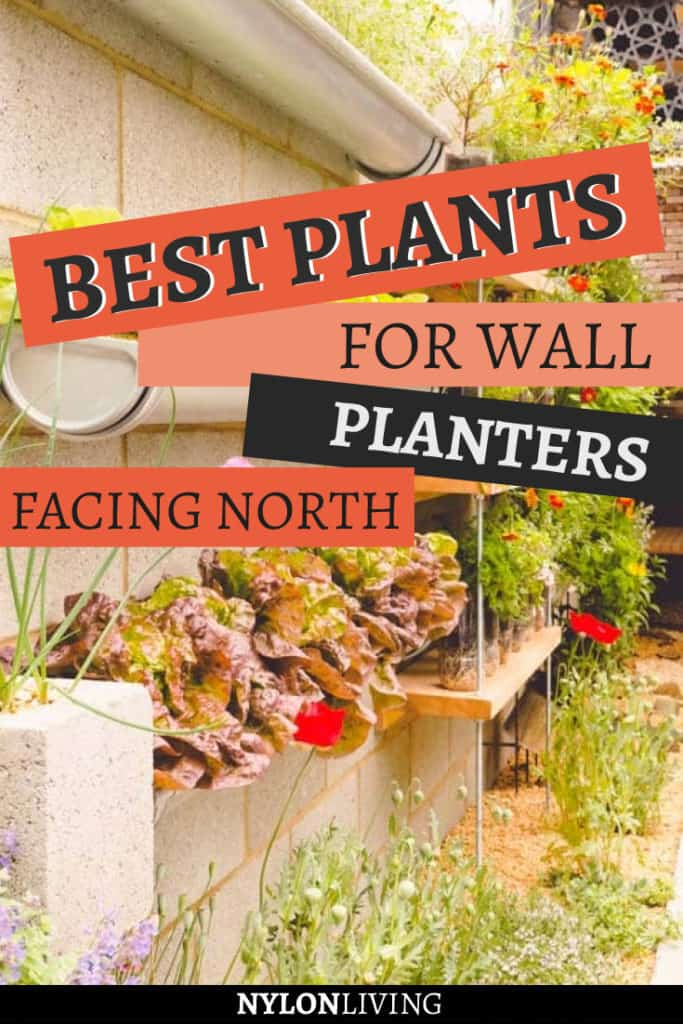 There are so many choices for plants for wall planters. What you pick really depends on which way your wall is facing. If you have a green wall facing north like I do, check out this selection of the best plants for wall planters facing north. #greenwall #greenwallideas #verticalgarden #greenwallplanters #plantsfacingnorth