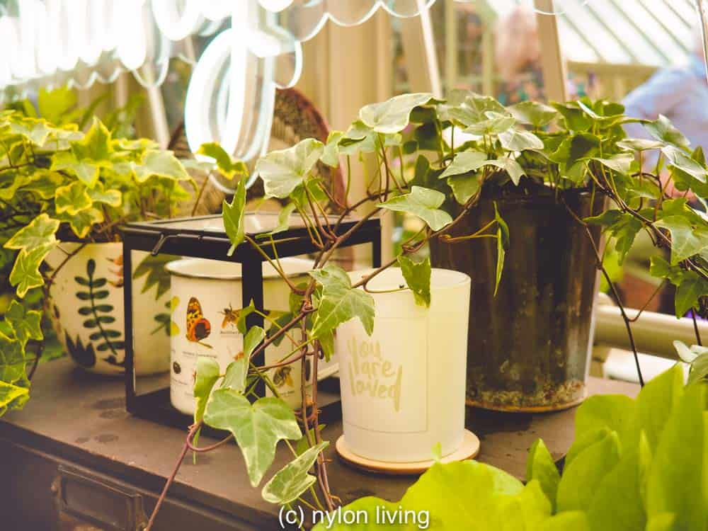 Simple shelving even with a basic greenhouse design can accommodate all of your needs stylishly.
