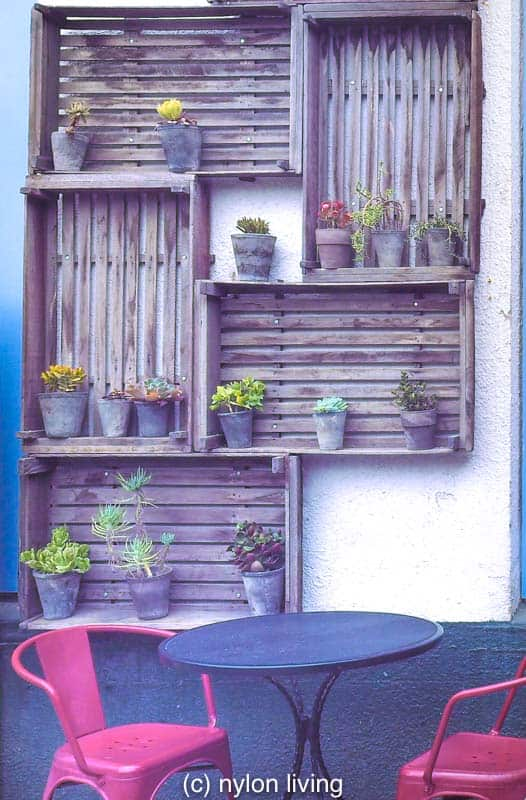Succulents are among the best plants for living wall options as long as you avoid overwatering.