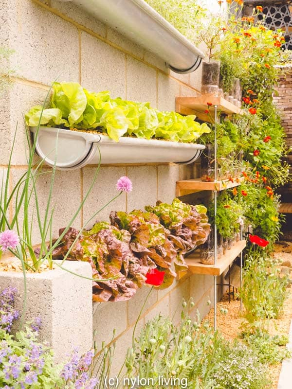 Green wall planters are used here to create a vegetable garden.