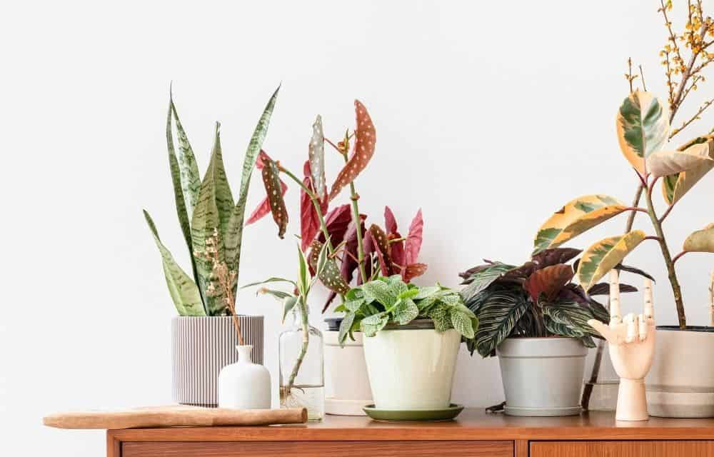 colorful house plants on a wood table with a white background